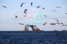 darwin-island-view-from-shore