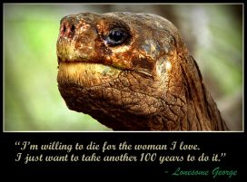 lonesome-george-tortoise-3-death-quote
