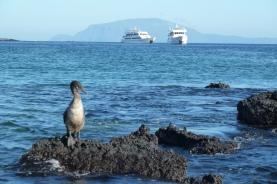 Galapagos Islands Cruises