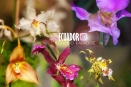 Orchid Banner