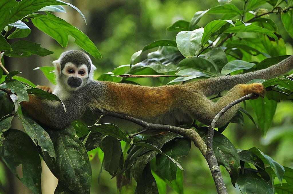 Galapagos Animals Go Galapagos Animals Tours Travel