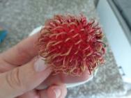 Fresh Lychee Nuts Up Close