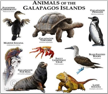 animals of galapagos islands