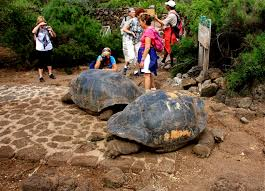 galapagos-tortoises-tourists-playing-with