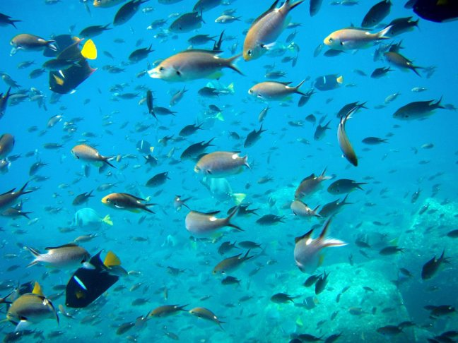 underwater-fishes-hd-image-galapagos-snorkeling