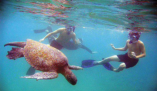 snorkeling-galapagos-with-turtles